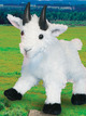 Maggie Mountain Goat- available after 5/25/2020