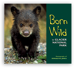 Born Wild in Glacier National Park